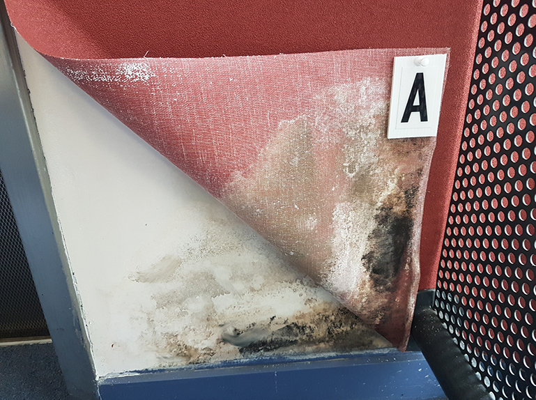 mould inspection